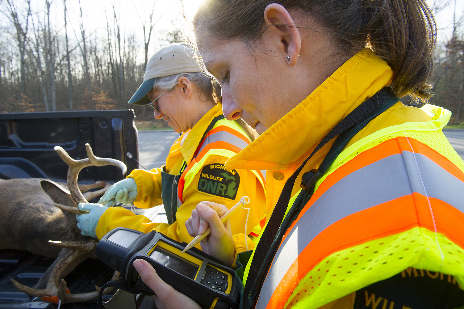 Two DNR check station workers inspect a deer