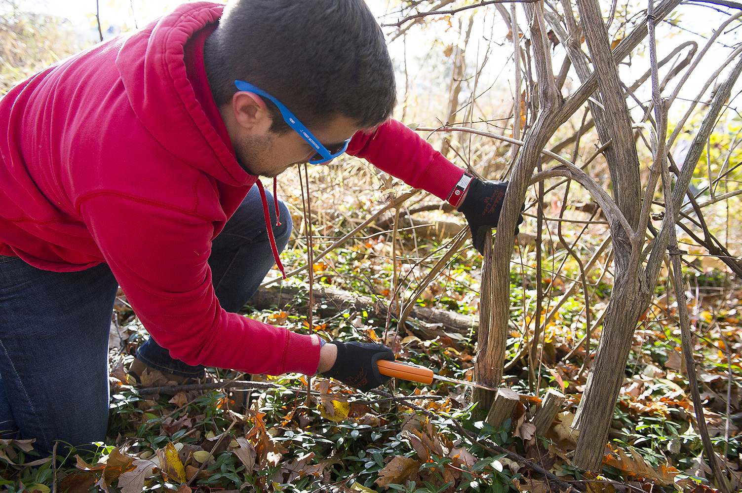 A youngster works to cut the base of a shrub