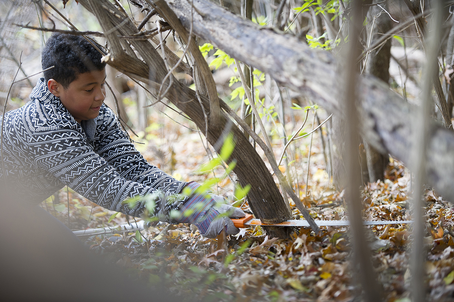 A youngster works to cut an invasive shrub