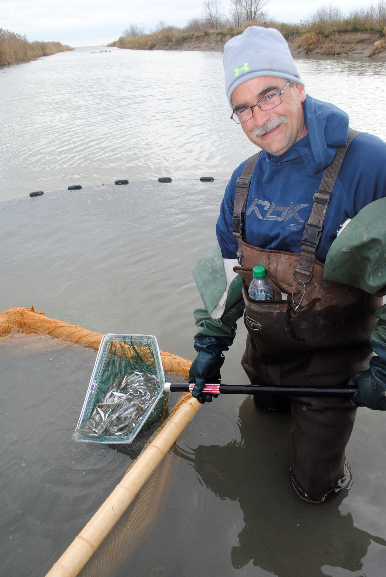 A minnow catcher displays a net full of silvery-looking minnows.