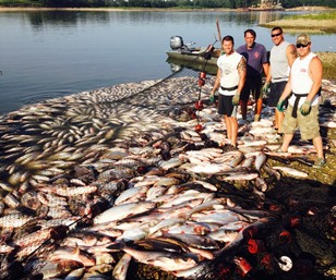 Invasive carp removed from Illinois River