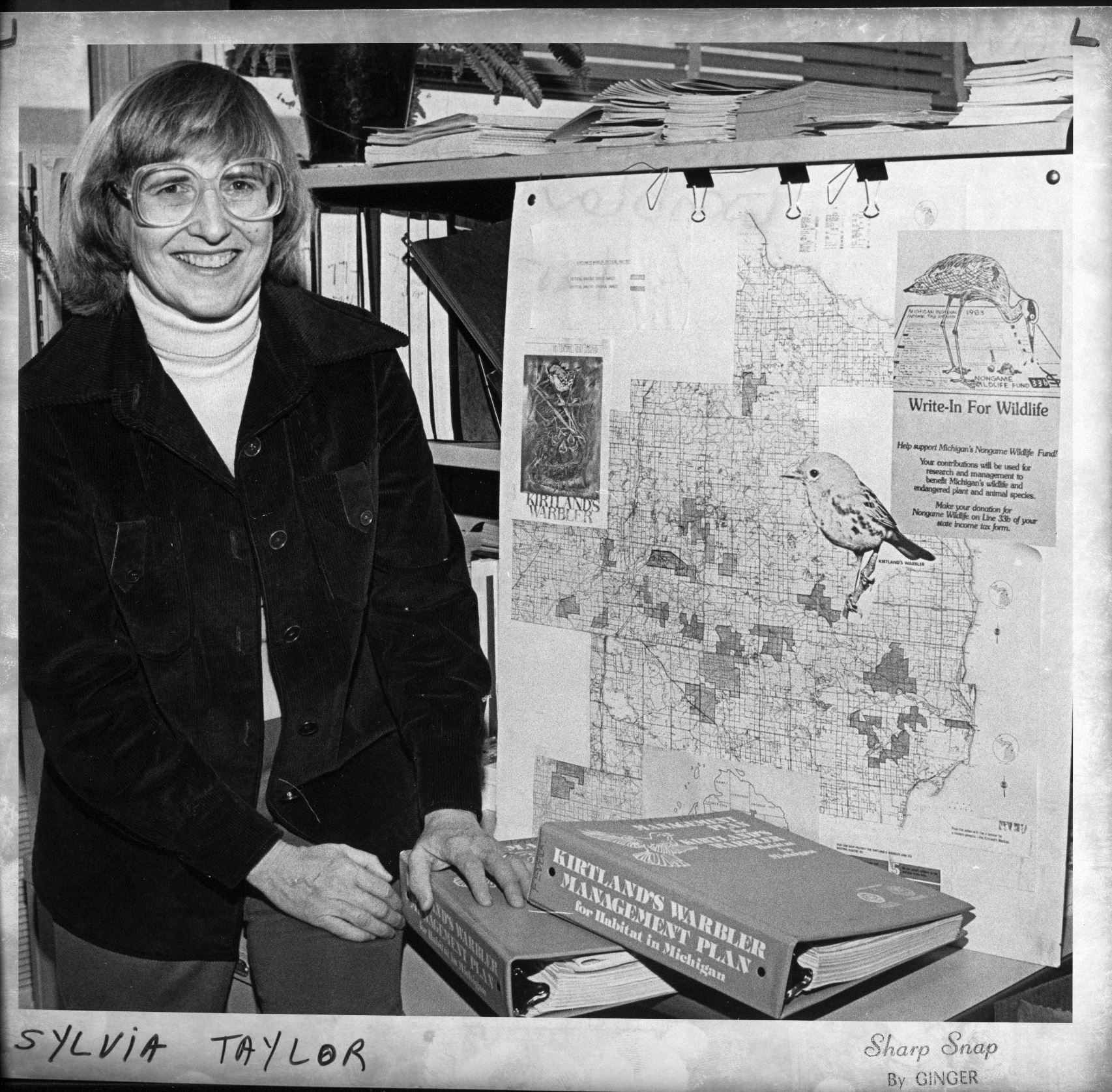 In a black-and-white image, Sylvia Taylor is pictured with a map and other Kirtland's warbler materials.