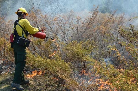 A firefighter sets a prescribed burn in Delta County.