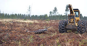 A heavy equipment operator works to scarify a clear-cut area in Marquette County.