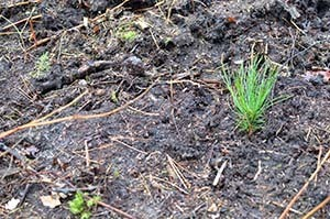 A seedling planted today will help regenerate a future forest.