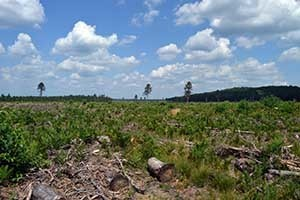 Trees and other plants regenerate on the site of a clear-cut.