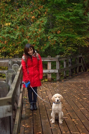 Woman in a red coat walking a golden retriever on a leash, on a decked area