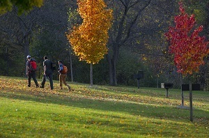 Three people walking up a hill in a park filled with trees, some of them changing to fall colors