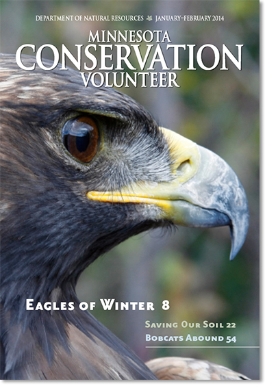 Cover of January-February 2014 issue of Minnesota Conservation Volunteer magazine showing head of a golden eagle
