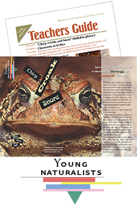 Image of Young Naturalists article and teachers guide