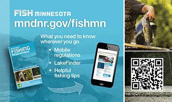 Fish Minnesota reference card