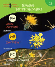Invasive Terrestrial Plants education book