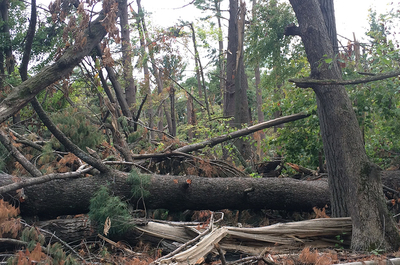 Storm damage with many trees down at Boot Lake SNA