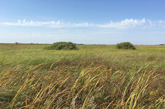 Malmberg Prairie Scientific and Natural Area
