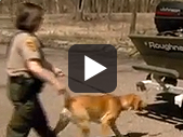 Zebra Mussel Sniffing Dogs