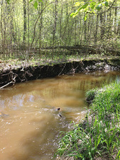 Elm Creek restoration