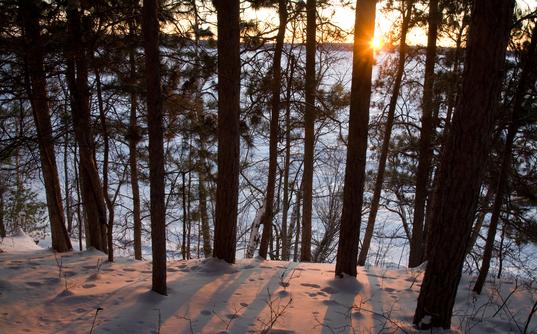 Minnesota forest in winter