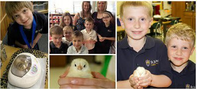 Baby Chicks from St. Michael Catholic School