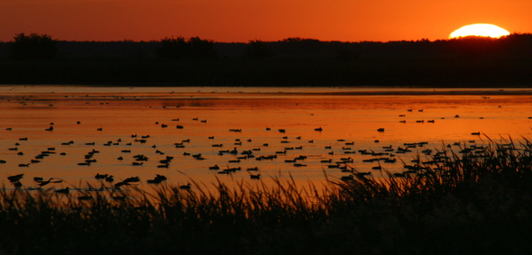 Minnesota sunset viewed from shore of a lake with ducks in the water.