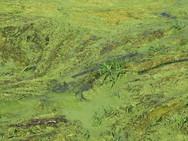 Nutrients fuel algal blooms