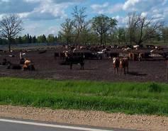 pasture-feedlot