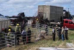 livestock truck rollover