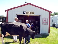 livestock county fair