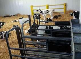 riverview calf unit