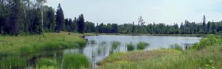 Wetland prioritization tool