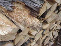 EABfirewood