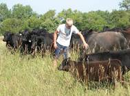 forbord cattle