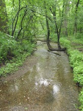 Valley Branch Creek in lower St. Croix watershed