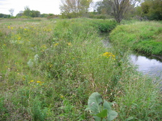 Streambank fully restored at Empire WWTF