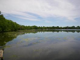 shields lake