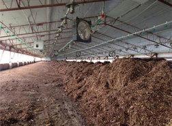 turkey compost