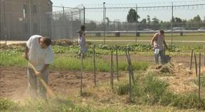 Southeast Correctional Center Garden