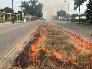 Central Avenue Median Burn