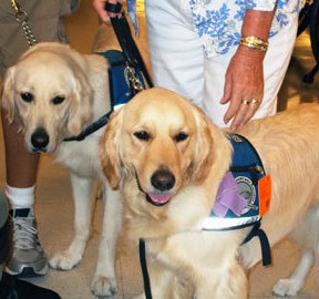 comfortdogs.givh