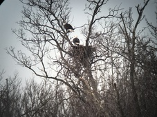 Eagles at Mercer County Park