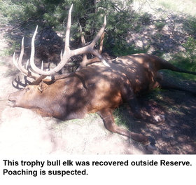 Trophy elk recovered