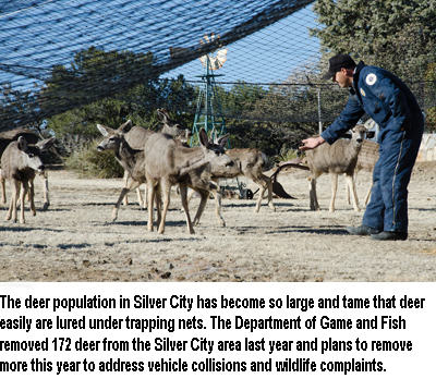 Archery doe deer hunt planned for silver city area new for Nm game and fish license