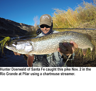 Nm game and fish fishing report for nov 10 2015 krtn for Conchas lake fishing report