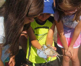 children holding blue crab moult