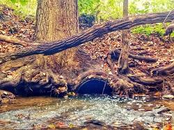 Culvert under a tree