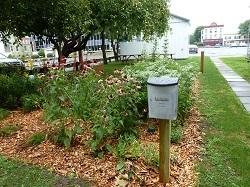 Ulster Country Rain Garden