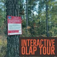 Interactive OLAP Tour