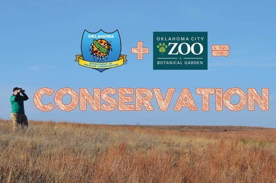 OKC Zoo and ODWC