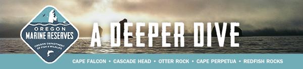 A Deeper Dive