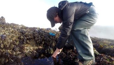 intertidal surveys