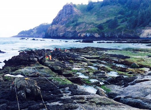 intertidal monitoring